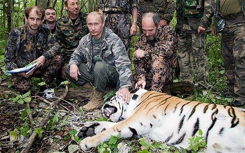 Poutine Tigre